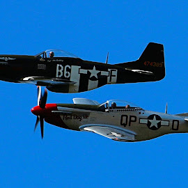 P-51 Mustangs by Robert Thompson - Transportation Airplanes