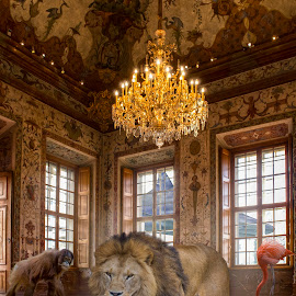Zoo by Christoph Reiter - Digital Art Animals ( lion, shark, light )