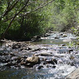 The River Runs  by Art Brokop - Landscapes Forests ( sangre de cristo mt, spring run off, dancing light,  )