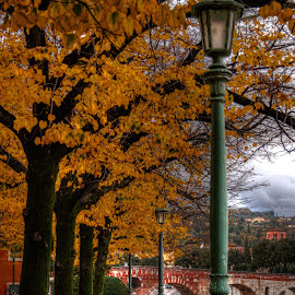 Riverview by Darin Williams - City,  Street & Park  Neighborhoods ( verona, autumn, adige, leaves, lamp post, italy, river )