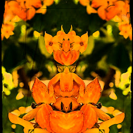 Flower Child by Sandy Friedkin - Digital Art Abstract ( reflections. orange, flowers )