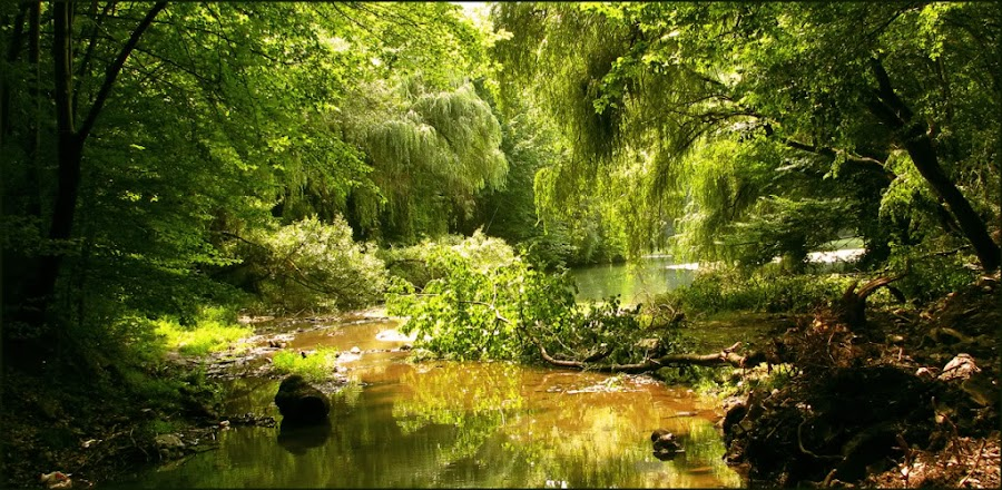 magical place by Adriana Petcu - Landscapes Travel ( water, tree, nature, green, light )