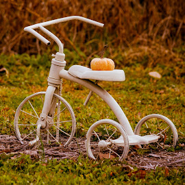 Vintage Trike by Deborah Lucia - Artistic Objects Still Life ( field, tricycle, colorful, pumpkin, vintage, white )