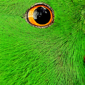 Green by Kenang Lahar Jingga - Animals Birds ( bird, green, eye )