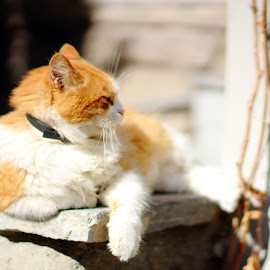 Relax by S. S. - Animals - Cats Portraits ( canon, cats, resources, kitten, cat, animals, stock, stockphoto, resource, animalphotography, stockimage, kitty, dslr )