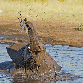 Joy of Water by Bridgena Barnard - Animals Other Mammals ( barnard, images, bridgena )
