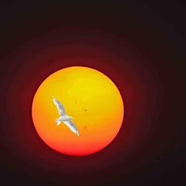 Sun Bird by Will McNamee - Digital Art Animals ( dld3us@aol.com, gigart@aol.com, aundiram@msn.com, danielmcnamee@comcast.net, mcnamee2169@yahoo.com, ronmead179@comcast.net,  )