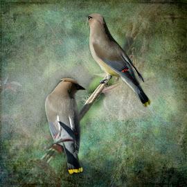 by Luc Raymond - Digital Art Animals