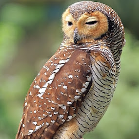 by Gesit Pinanjaya - Animals Birds