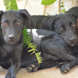 Dipper & Daisy by Patricia Chapple - Animals - Dogs Puppies ( #dog, #rescue, #cute, #black, #puppy,  )