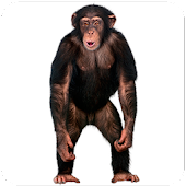 App Real Talking Monkey apk for kindle fire