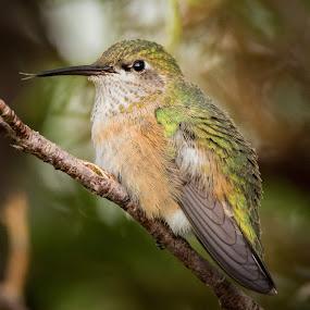 by Rick W - Animals Birds