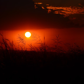 Veld Grass and Sun by Jared Van Bergen - Nature Up Close Leaves & Grasses ( photos, grass, sunset, veld, sun, photography )