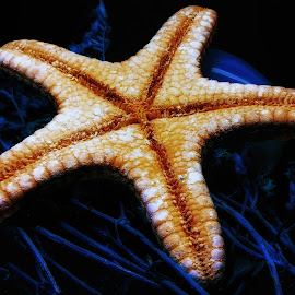 Star Fish Bottom by Dave Walters - Nature Up Close Other Natural Objects ( star fish, nature, colors, artistic )
