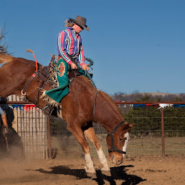 7 seconds by Joel Thompson - Sports & Fitness Rodeo/Bull Riding ( action photo, color, kingston horse show, horse, rodeo, broncin buck, buck rider, bronco, roseo, arkansas )