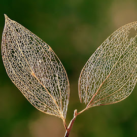by Boris Buric - Nature Up Close Leaves & Grasses (  )