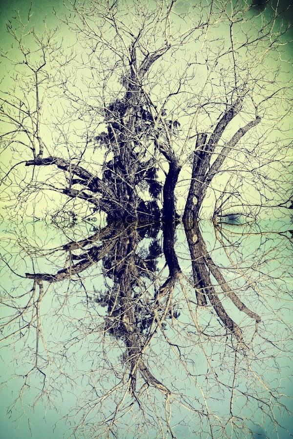 Digref 116 by Michael Moore - Digital Art Things