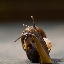 Snailes in Love part II by Wendy Faber - Novices Only Macro