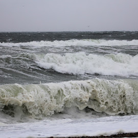 Waves by Susanne Carlton - Nature Up Close Water