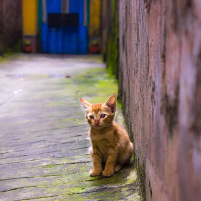 by Soumyaroop  Chatterjee  - Animals - Cats Kittens ( colour, contrast, cat, kolkata, street, canon 550d )
