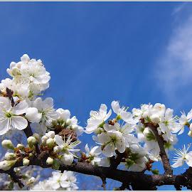 Fa nász by Zlatko Sarcevic - Nature Up Close Trees & Bushes ( fák, tavasz, rügyek, makró, virágok )