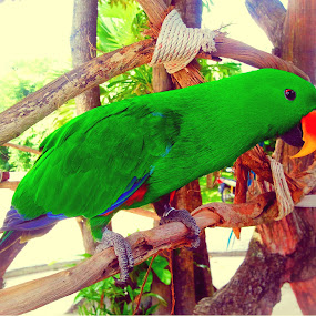 Parrot by Benz Otiniano - Instagram & Mobile iPhone