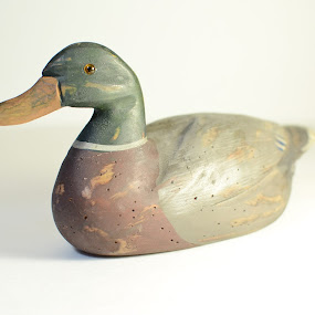 Mallard  by Sawyer Jones Photography  - Artistic Objects Antiques ( studio, sawyer jones, flash, painted, mallard, 35mm, object, nikon d7000, photography, blank background, wooden, stock, duck, antique, animal )