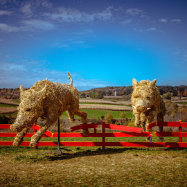 Playing Pigs by Ann Strelow - Landscapes Prairies, Meadows & Fields ( wisconsin, sculpture, art, pigs, fermentation fest, artistic, agriculture, agricultural, farming )
