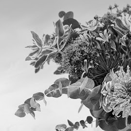 by Bruce Newman - Black & White Flowers & Plants ( arrangement, flower photography, detailed, black and white,  )