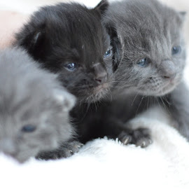 by Ramona Văsiaşi - Animals - Cats Kittens