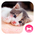 Cute Wallpaper Feline Sight Theme APK