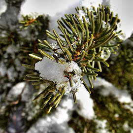 by John Geddes - Nature Up Close Trees & Bushes