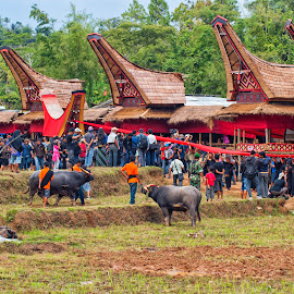 funeral in toraja by Hartono Wijaya  - People Street & Candids ( ethnic, toraja, animals, tribe, cultural, travel, ceremony, people, street photography, cultural heritage, indonesia, funeral, landscapes, travel photography, culture )