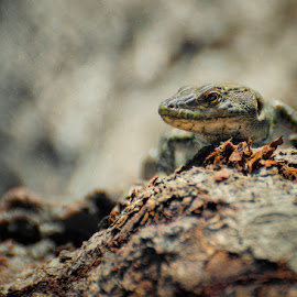 In the forest by Ivan Ivanov - Animals Reptiles ( reptiles, animals, wildlife, reptile, animal )