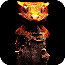 Crested Gecko. Live wallpapers