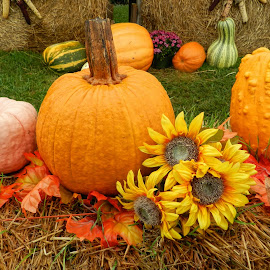 Pumkins by Karen Carter Goforth - Public Holidays Thanksgiving ( decor, autumn, sunflowers, pumpkins, fall,  )