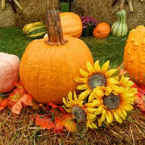 Pumkins by Karen Carter Goforth - Public Holidays Thanksgiving ( decor, autumn, sunflowers, pumpkins, fall,  )