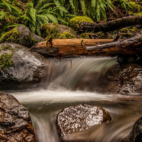 Under the log by Ivan Johnson - Landscapes Waterscapes (  )