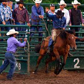 by Buddy Boyd - Sports & Fitness Rodeo/Bull Riding ( rock bottom, buster, bronc, ozarks, bronco, gate )