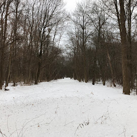 Snowy Country Road by Kristine Nicholas - Novices Only Landscapes ( winter, cold, clearing, street, snow, trees, forest, road, landscape, roadway, country )