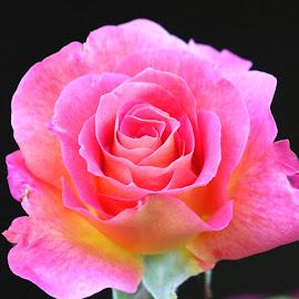 Flower 855 by Raphael RaCcoon - Flowers Single Flower