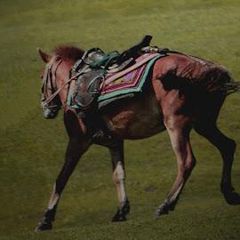 by Rita Chakrabarty - Animals Horses