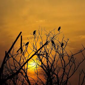 The parting shot by Tridibesh Indu - Landscapes Sunsets & Sunrises ( moment, sunset, rajasthan, twilight, bharatpur, sanctuary, india, keoladeo, glow, dusk, birds, golden )