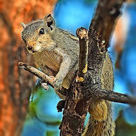by Dinesh Pandey - Animals Other Mammals (  )