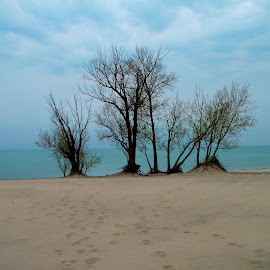 Trees, dunes, and the lake... by John Pobursky - Landscapes Travel ( state_parks, michigan, lake_michigan, warren_dunes_state_park, trees,  )