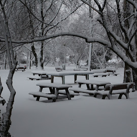 by Aurelian Hutanu - City,  Street & Park  City Parks