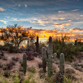 Sunrise over Tucson by Charlie Alolkoy - Landscapes Deserts ( clouds, desert, sky, sunset, arizona, tucson, sunrise, saguaro, cactus )