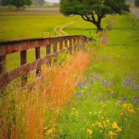 Fence and tree by Brenda Shoemake - Landscapes Prairies, Meadows & Fields