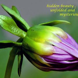 flower by SANGEETA MENA  - Typography Quotes & Sentences
