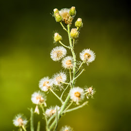 by Mohsin Raza - Nature Up Close Other plants (  )